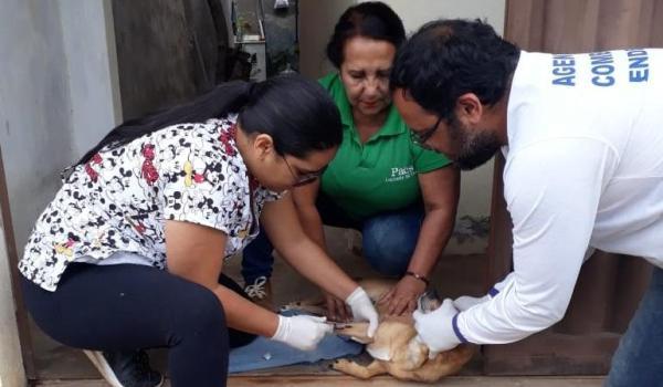 Realização de testes rápidos de leishmaniose visceral canina (Calazar)